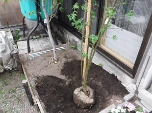 移植 樹木